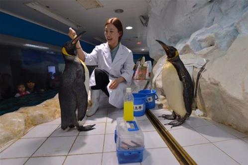 해양동물건강검진-한화