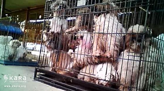 동물보호법은왜있는가_사진3