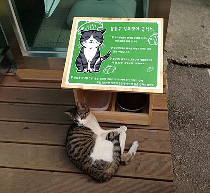 kangdonggu_street cat
