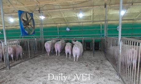 제1호동물복지양돈농장