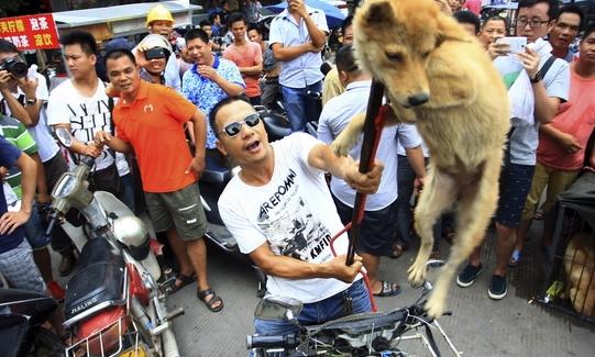 중국2014개고기축제1