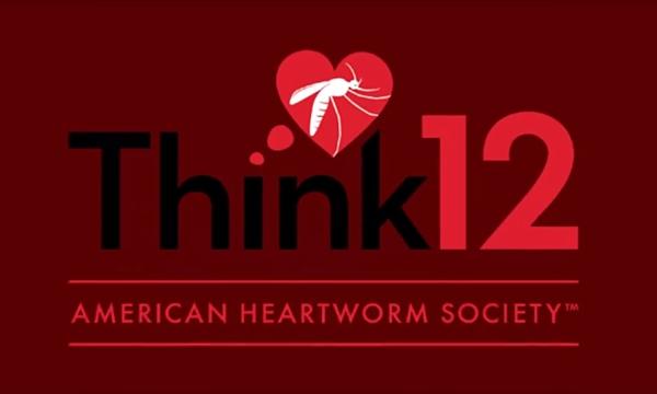 AHS심장사상충1년12개월예방해야