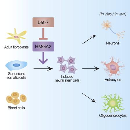 150120 neuronal stem cell