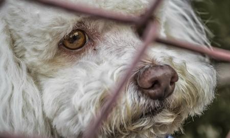 abandoned_dog