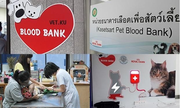기자가 3년전 방문했던 태국 카세사트 수의과대학 동물병원의 혈액은행. 사료회사와 협업을 통해 성공적인 헌혈 프로그램이 운영되고 있었다