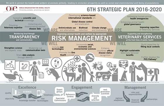 oie_6th strategic plan