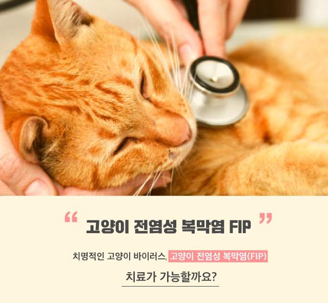 FIP_mothercat_dailyvet1