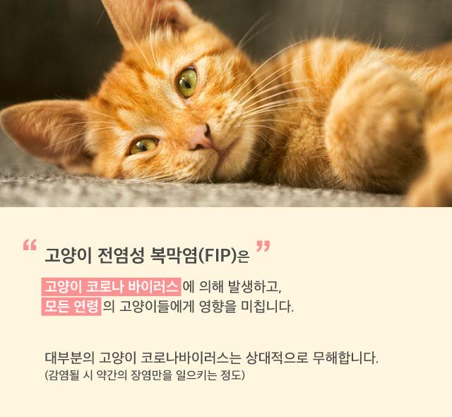 FIP_mothercat_dailyvet3