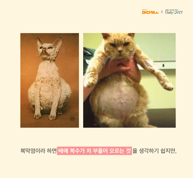 FIP_mothercat_dailyvet5