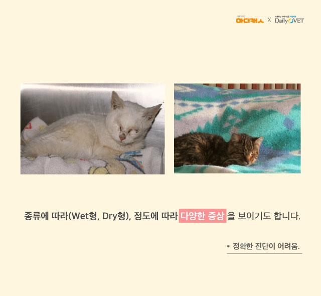 FIP_mothercat_dailyvet6