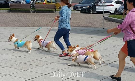 2016kangwon_festival6