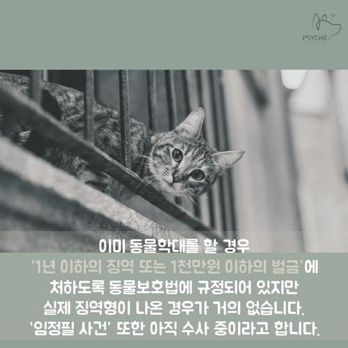 cat_lim8