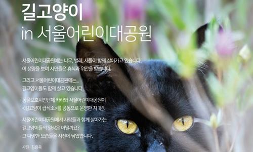 2017cat exhibition_kara