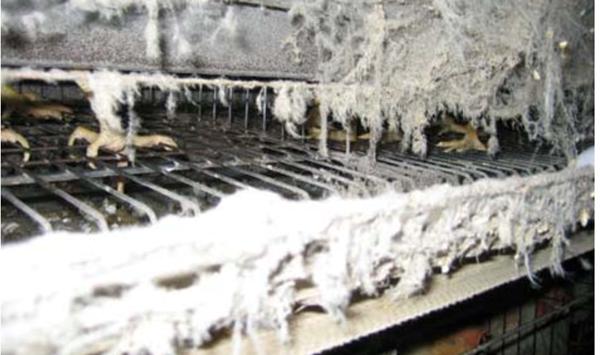 먼지와 진드기에 오염된 계사 내부