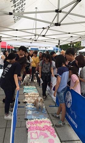 20170910 kangwon festival8