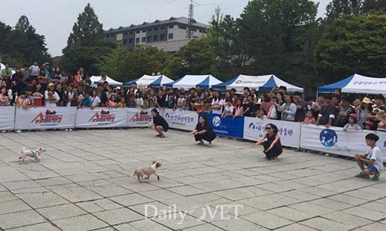 20170910 kangwon festival9