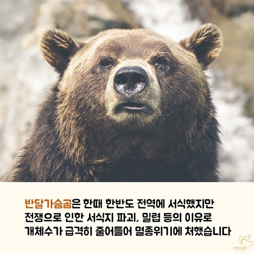 201709card_bear2