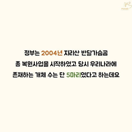 201709card_bear3
