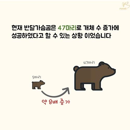 201709card_bear4