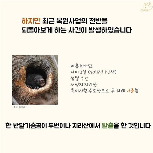 201709card_bear5