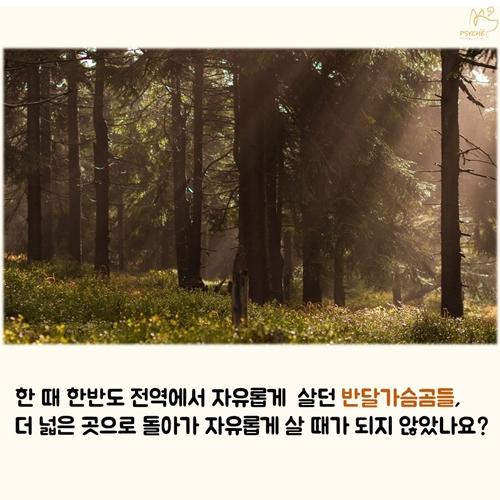 201709card_bear9