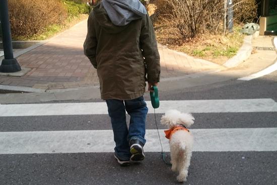 줄을 하고 산책중인 개 개가 사람을 경계하지 않게 하기 위해서는 3개월령이전부터 사람과 자주 만나 친숙해지는 사회화 과정이 중요하다.  산책을 통해 사회화를 하고 그래야 사람과 친숙해져 무는 사고나 짖는 문제를 줄일 수 있다. Ⓒ동물과함께행복한세상