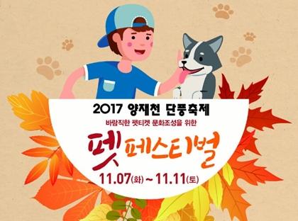 20171107yangjae pet