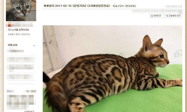 무허가 분양업자가 판매창구로 활용한 인터넷 블로그 (자료 : 대한수의사회 불법동물진료신고센터)