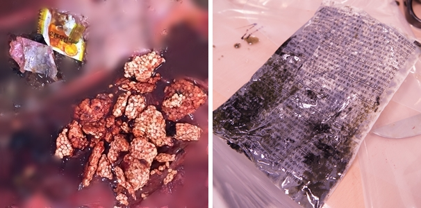 폐사한 바다거북 체내에서 비닐, 스티로폼 등 다양한 쓰레기가 발견됐다 (사진 : WWF코리아)