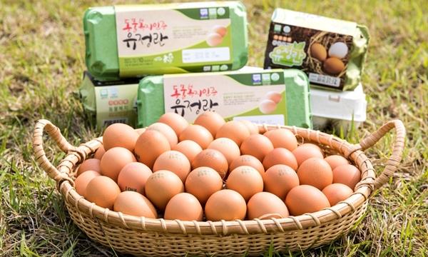 동물복지인증 달걀 (사진 : 농촌진흥청)