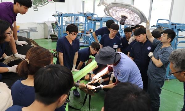 본지가 평창 연수원 심화과정을 방문한 10일 오전에는 소 발굽삭제 교육이 진행됐다.  교육생 실습에 앞서 시범을 보이는 김단일 교수.