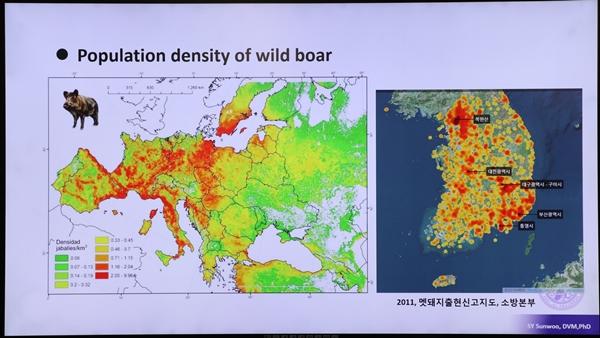 유럽은 물론 국내에도 전국적으로 분포하고 있는 야생 멧돼지 (선우선영 박사 발표자료에서 발췌)