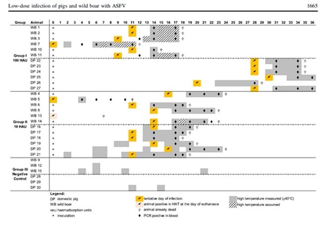 그림3. 아프리카돼지열병의 전파 정도를 알 수 있는 실험. 실험자들은 야생돼지에 바이러스를 노출시킨 다음, 같은 사육시설 내에 있는 다른 돼지와 펜스를 사이에 둔 돼지들에게 전염되는 양상을 분석했다. 그 결과, 아프리카돼지열병은 같은 사육구간 내에서는 잘 전파되지만 펜스만 사이에 있어도 전파속도가 느려지는 것을 발견했다(Pietschmann, Guinat et al. 2015).