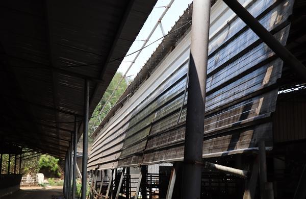 권순균 원장이 운영하는 장안농산 목장에서 지붕에 물을 뿌려주고 있는 모습