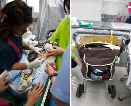 Birthday의 흉강 삼출물을 뽑아내는 장면 (왼쪽). 보호자가 기증한 Birthday의 유모차 (오른쪽)