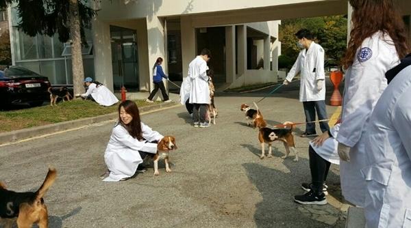 충남대 수의대 동물복지 동아리 'VEVO' 학생들이 실습견 산책봉사를 실시하는 모습
