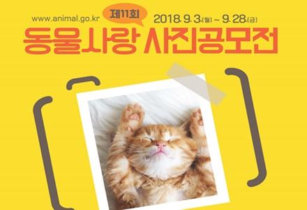 2018 animal love photo