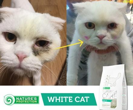 NP_white Cat20181019