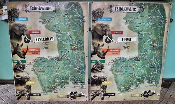 각 캠프마다 관광객들이 직접 동물을 발견한 위치를 표시하는 지도가 있다. 어디에서 어떤 동물이 지나갔는지 구경하는 재미가 쏠쏠하다. 다만 코뿔소는 밀렵꾼들이 노릴 수 있어 표시할 수 없다.