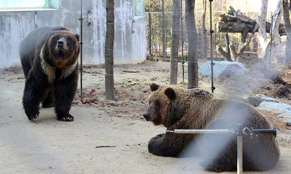 신축 곰사에 머무는 전주동물원 곰들 (사진 : 전주시청)