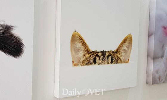 interview_dr.cat4