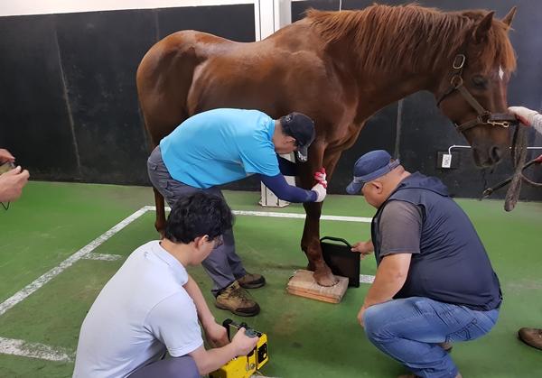 181210 horse6