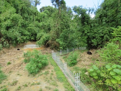 사진 1. 베트남 깟 띠엔 국립공원 생츄어리 - 자연 그대로의 대숲이 아름답다