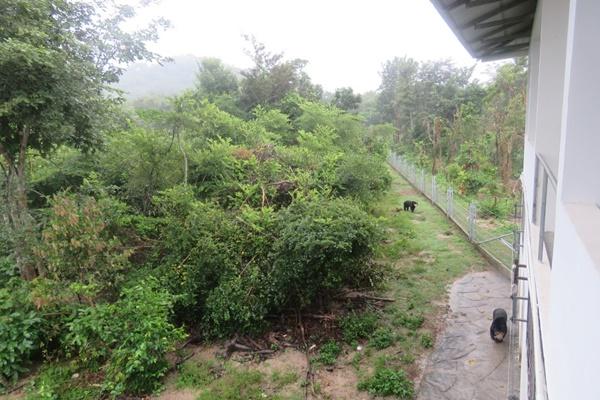 사진 3. 캄보디아 타마오 생츄어리 - 풍부한 숲은 그 자체로 훌륭한 놀이터이자 행동풍부화 도구이다.