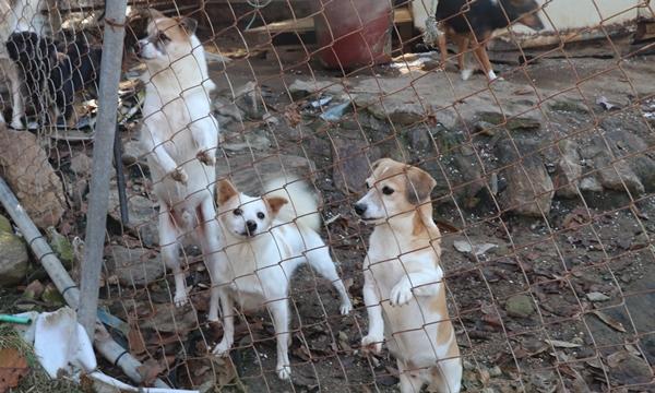 경기도의 한 사설 유기동물보호소 (자료사진)