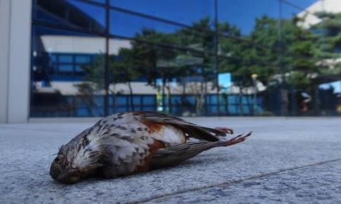 유리창에 부딪혀 폐사한 새 (사진 : 환경부)