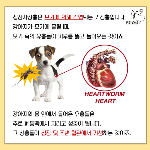 20190325card_heartworm3