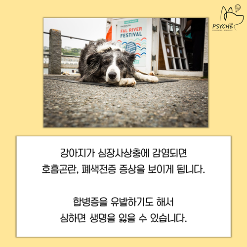 20190325card_heartworm4