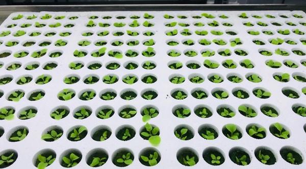 식물에서 백신을 추출하는 바이오앱 식물공장