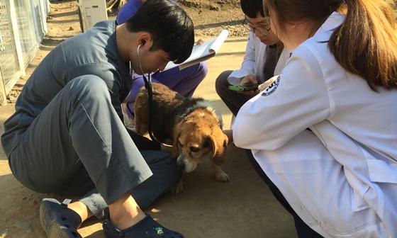 20190417chungnam_beagle2
